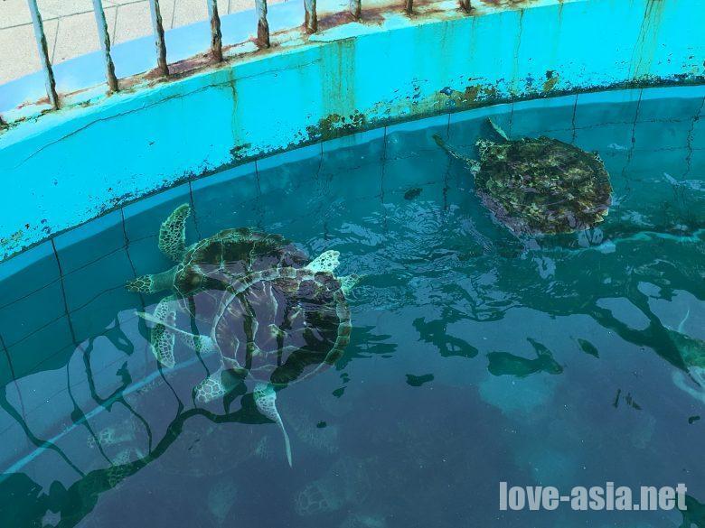 ウミガメ保護センター